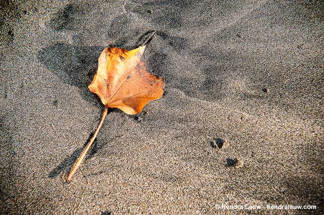 Fallen Leaves on Seminyak Beach Bali
