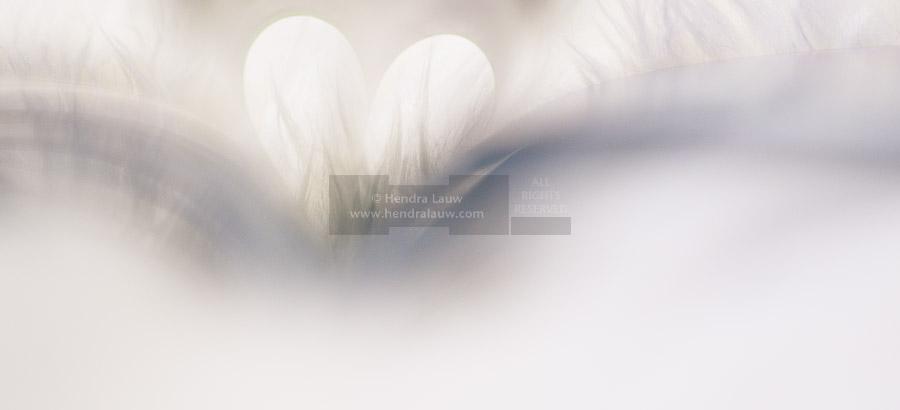 A Macro Photography Idea – LOVE