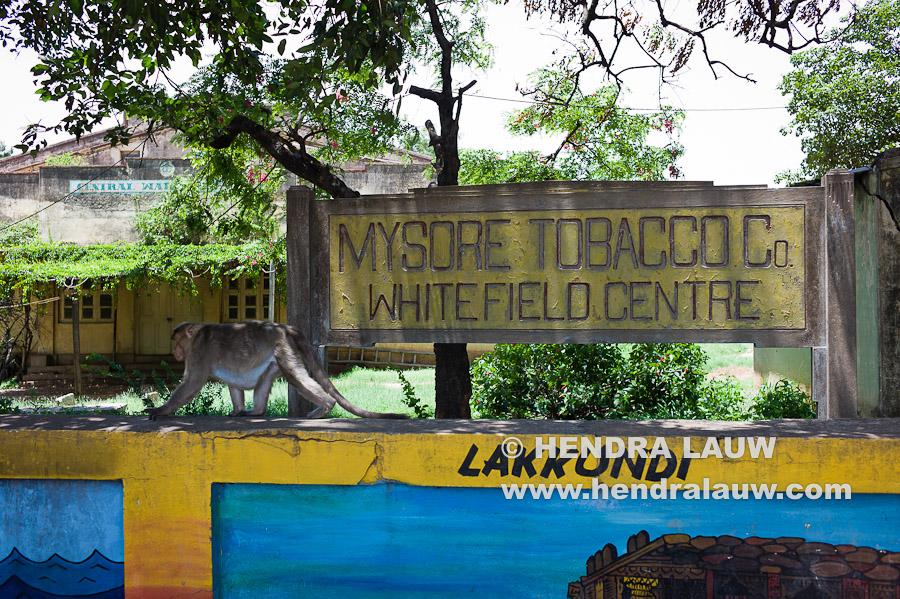 Old Mysore Tobacco Company