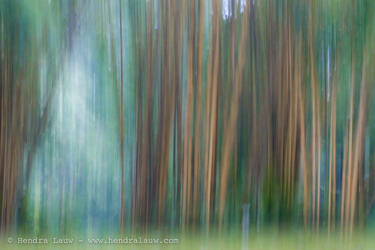 Abstract Photography – the Bamboo